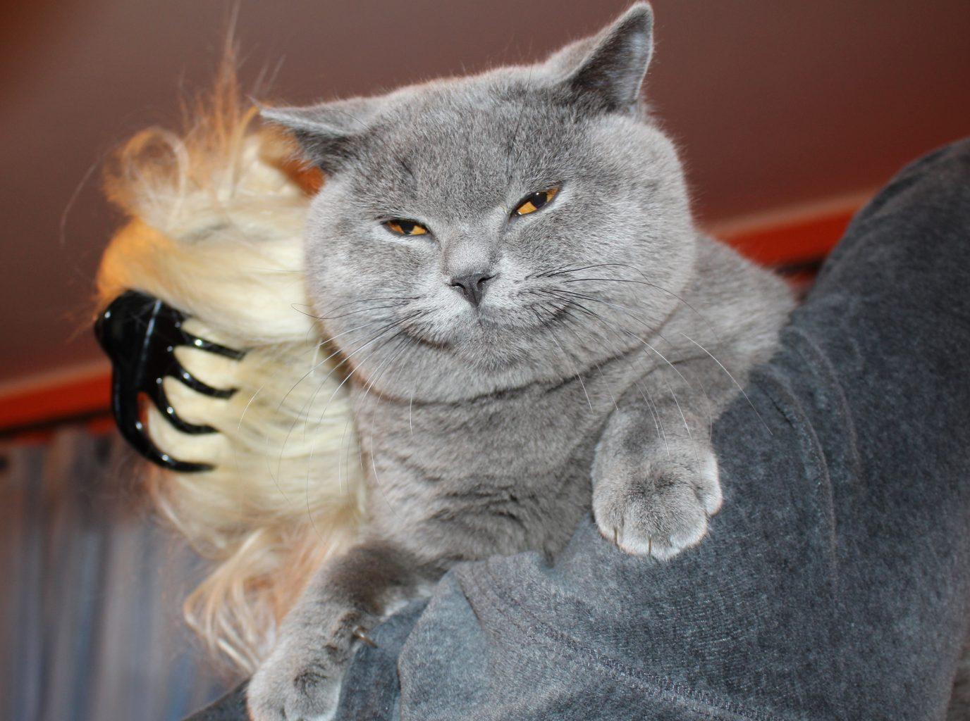 Koty bytyjskie