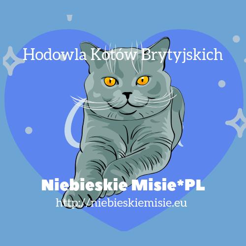 Hodowla Kotów Brytyjskich | Niebieskie Misie*PL | Felis Polonia