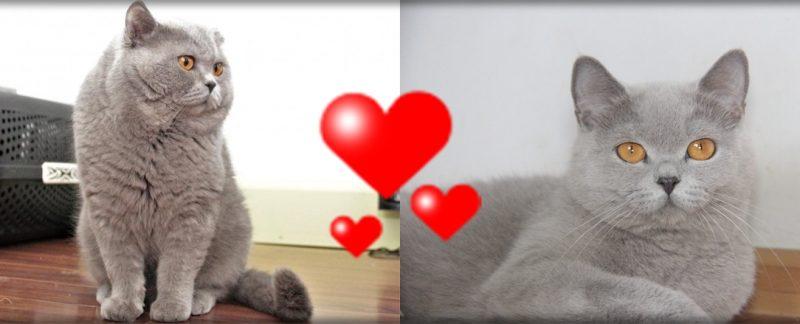 Koty brytyjskie Mandi i Bonifacy