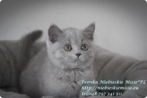 Ivonka Niebieskie Misie (3)