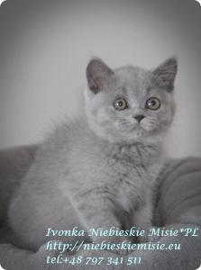 Ivonka Niebieskie Misie (9)
