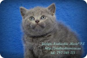 Miot J2-Jaclyn