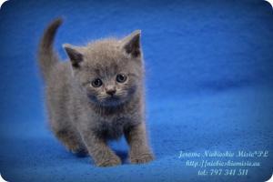 Jerome (11)