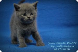 Jerome (13)