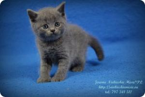 Jerome (8)