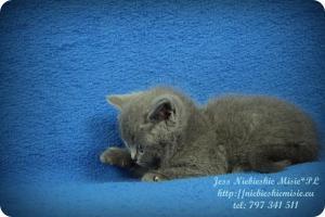 Jess (12)