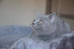 Oland-koty brytyjskie (11)
