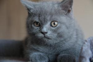 Oland-koty brytyjskie (15)