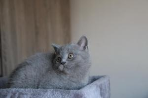 Oland-koty brytyjskie (3)