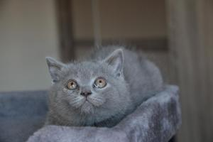 Oland-koty brytyjskie (8)