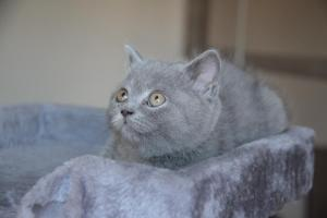 Oland-koty brytyjskie (9)