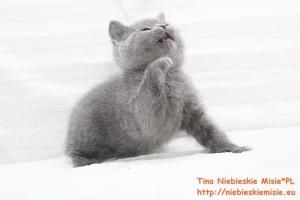 Tina Niebieskie Misie 11
