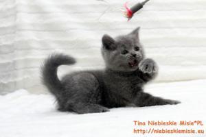 Tina Niebieskie Misie 19