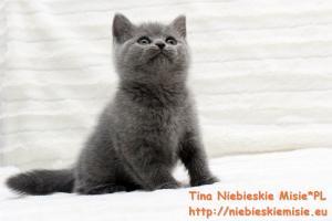 Tina Niebieskie Misie 20