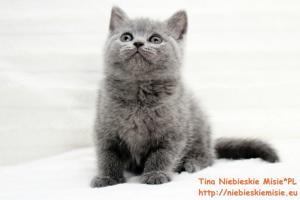 Tina Niebieskie Misie 4