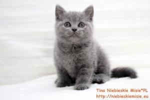 Tina Niebieskie Misie 5