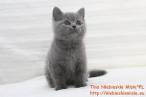 Tina Niebieskie Misie 7