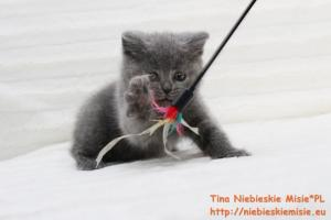 Tina Niebieskie Misie 8